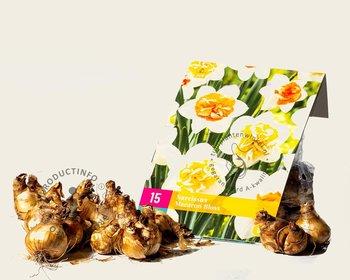 Narcissus Macaron Bloss