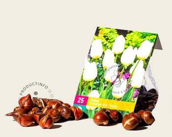 Tulipa triumph Wit