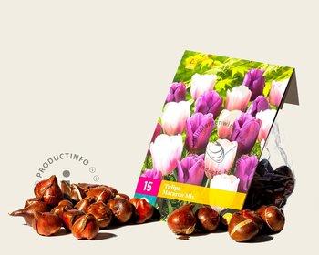 Tulipa Macaron Mix