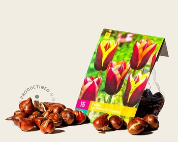 Tulipa My Favourite Topping