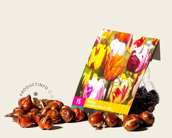 Tulipa Flaming Beauty Mix