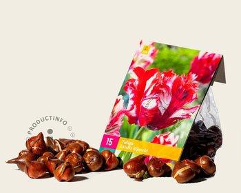 Tulipa 'Estelle Rijnveld'
