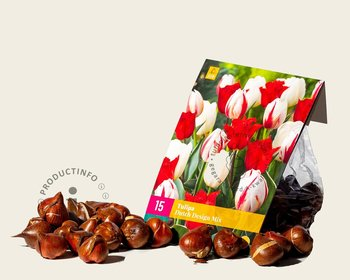 Tulipa Dutch Design Mix