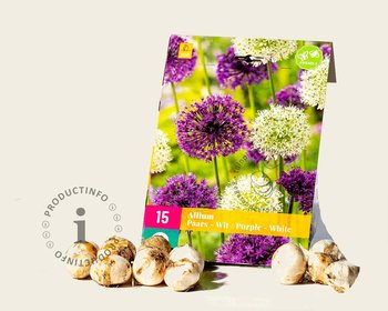 Allium Mix Paars-Wit