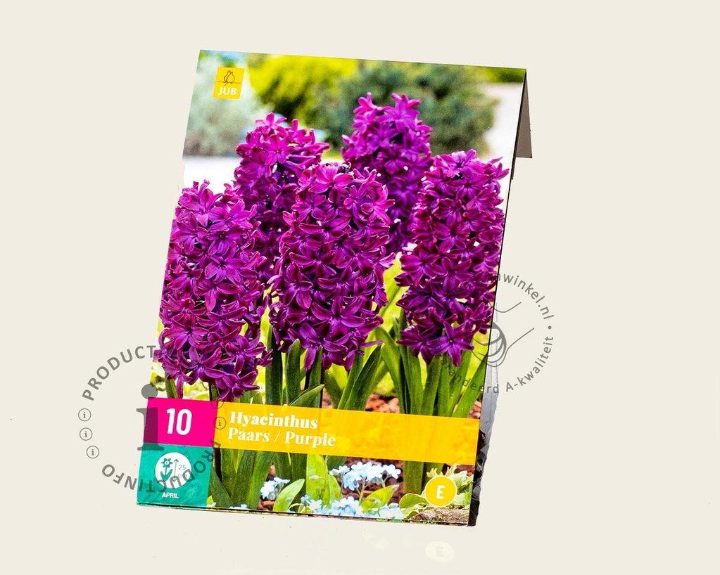 Hyacinthus Paars