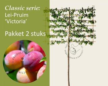 Lei-Pruim 'Victoria' - Classic - pakket 2 stuks + EXTRA'S!