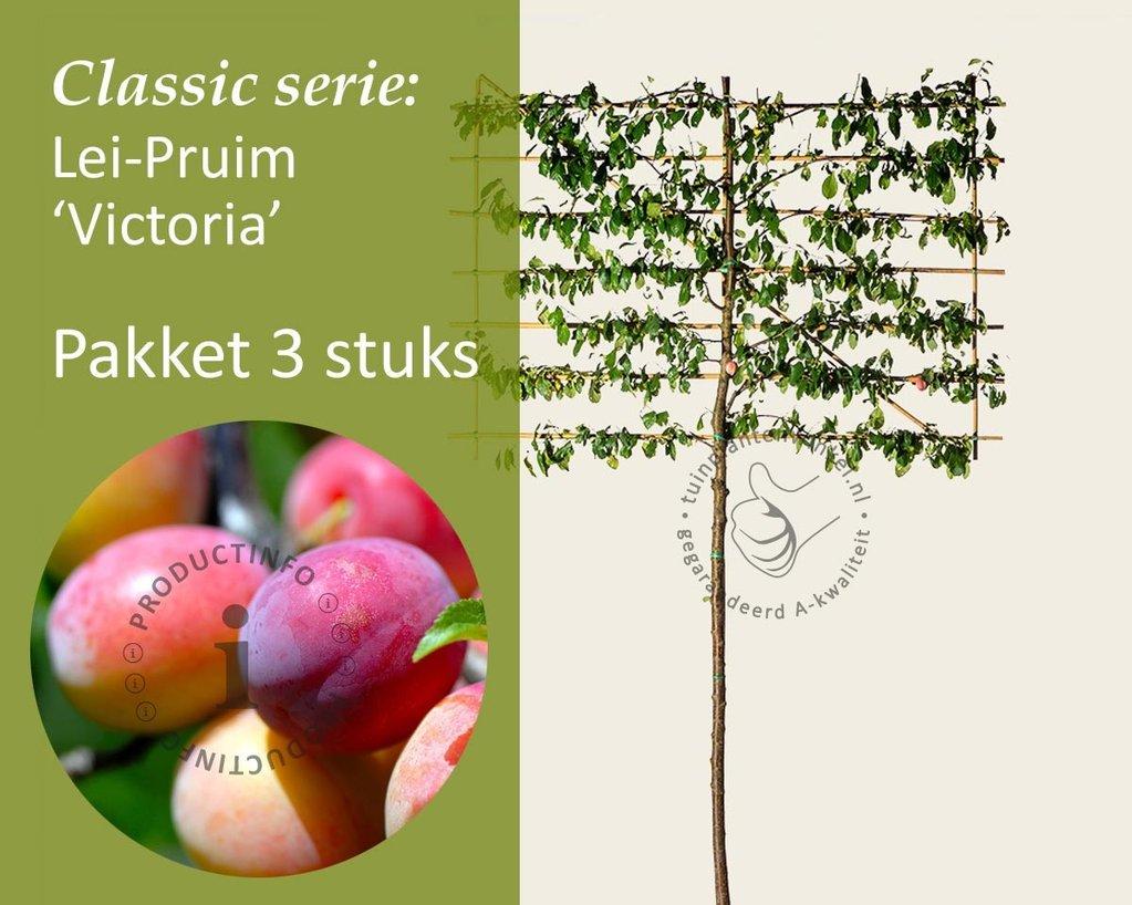 Klik hier om Lei-Pruim 'Victoria' - Classic - pakket 3 stuks te kopen