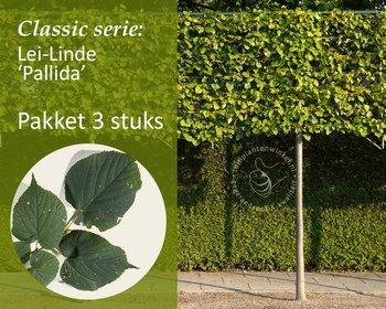 Lei-Linde - Classic - pakket 3 stuks + EXTRA'S!