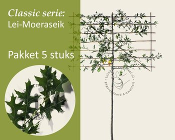 Lei-Moeraseik - Classic - pakket 5 stuks + EXTRA'S!