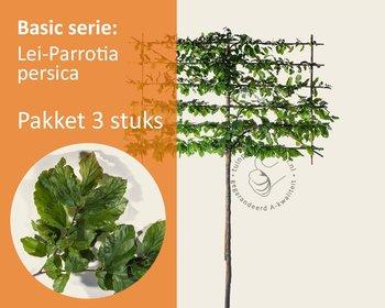Lei-Parrotia - Basic - pakket 3 stuks + EXTRA'S!