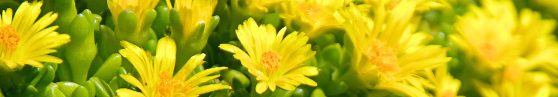 Rotsplanten