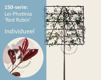 Lei-Photinia - 150 - individueel geen extra's