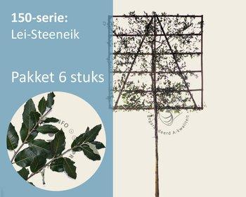 Lei-Steeneik - 150 - pakket 6 stuks + EXTRAS!
