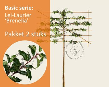 Lei-laurier l. 'Brenelia' - Basic - pakket 2 stuks + EXTRA'S!