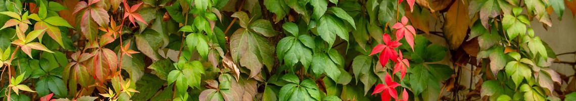 Alle klimplanten