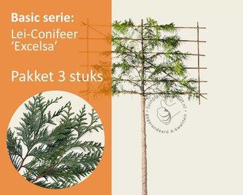 Lei-Conifeer 'Excelsa' - Basic - pakket 3 stuks + EXTRA'S!