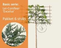 Lei-Conifeer 'Excelsa' - Basic - pakket 6 stuks + EXTRA'S!