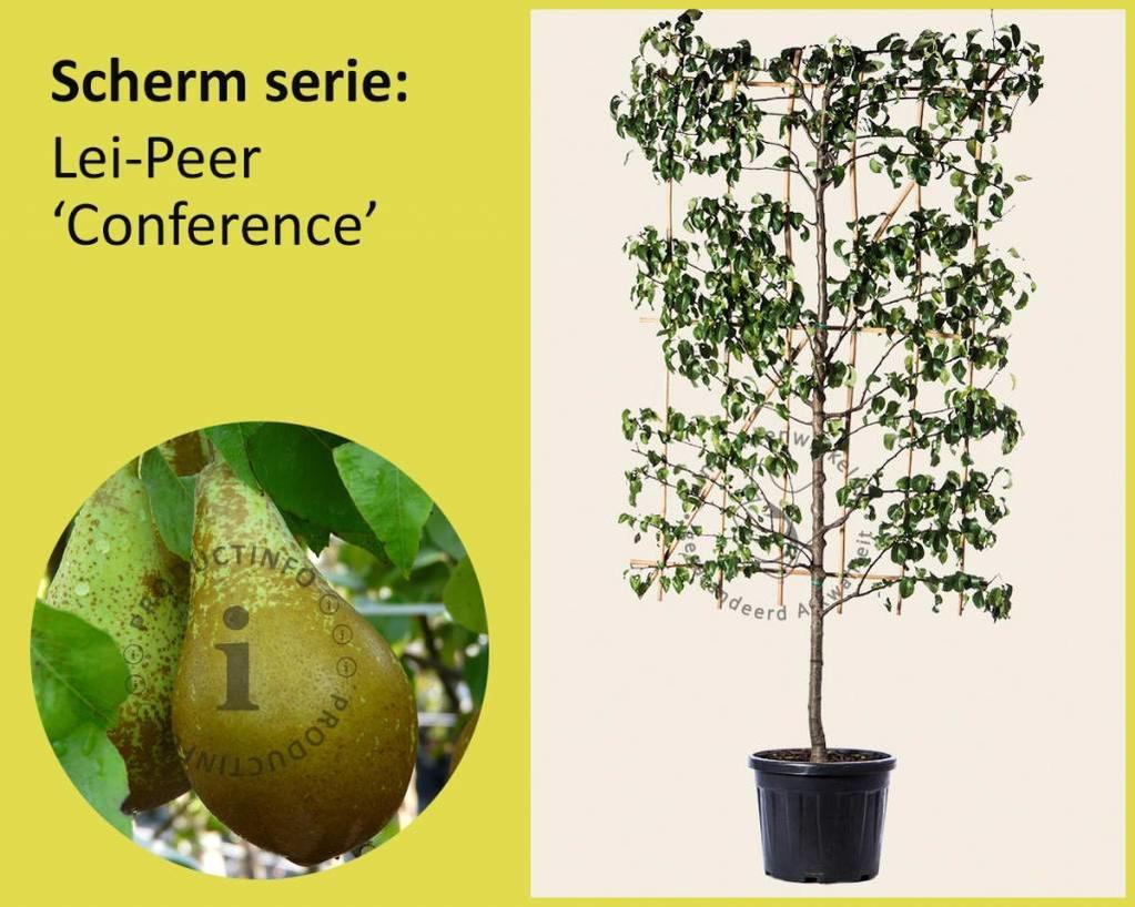 Lei-Peer 'Conference' - Scherm