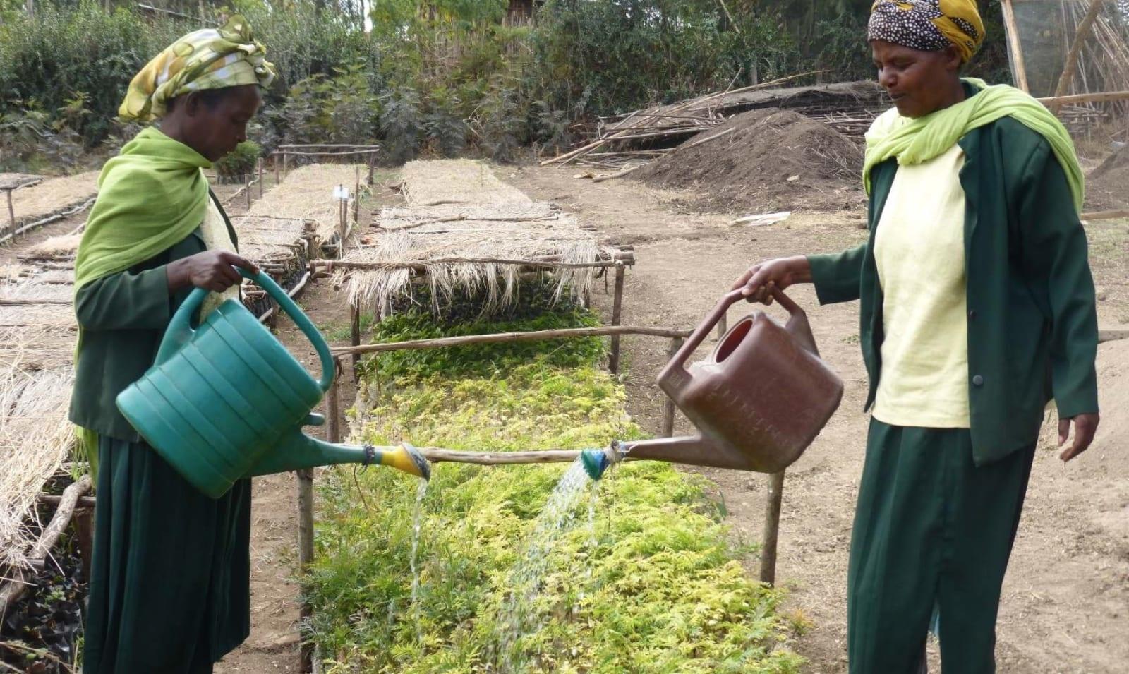 Aufforstung Projekt Äthiopien