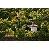 Paulo Laureano Branco - Wijn van de maand
