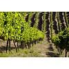 Tarapacá Carmenère - Wijn van de maand