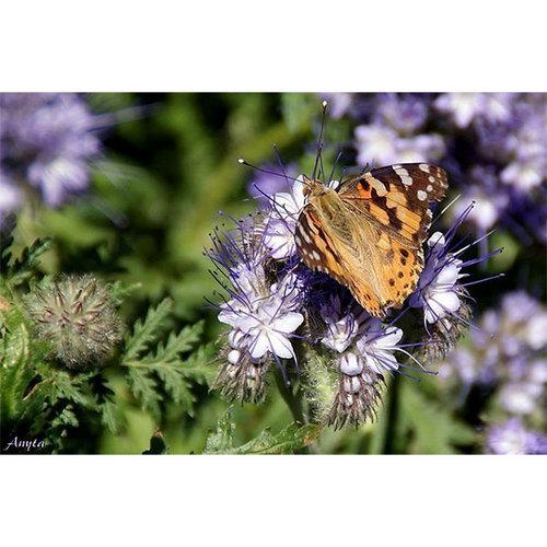 Sweet Living Schilderij Canvas Vlinder