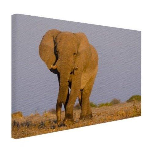 Sweet Living Afrikaanse Olifant Schilderij Canvas