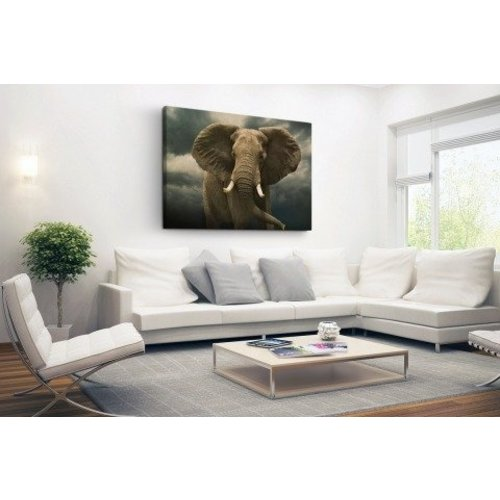 Sweet Living Olifant Schilderij Canvas