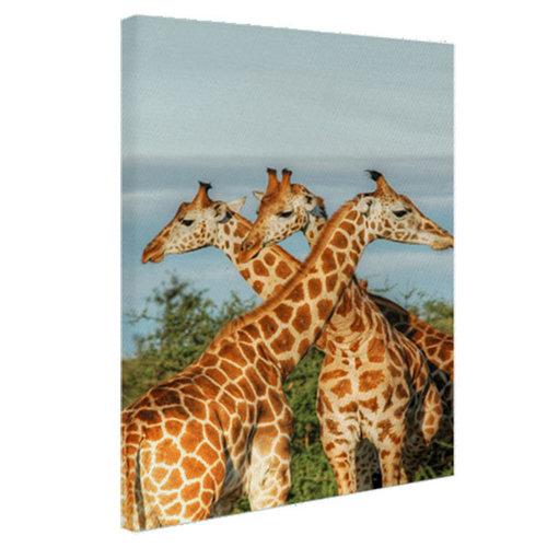 Sweet Living Giraffen in Oeganda Canvas schilderij