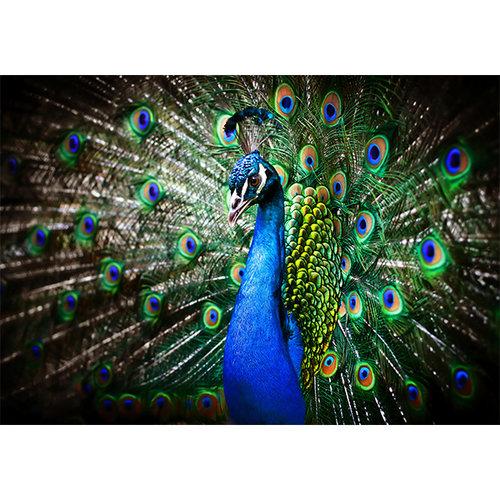 Sweet Living Blauwe pauw schilderij canvas