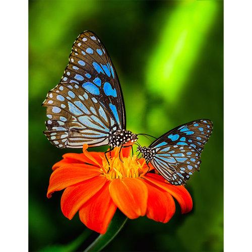 Sweet Living Blauwe vlinders schilderij canvas - 60xH90 cm