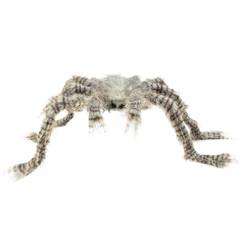 Nep Spin Tarantula