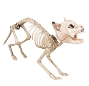 Kat skelet