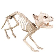 Kat-skelet