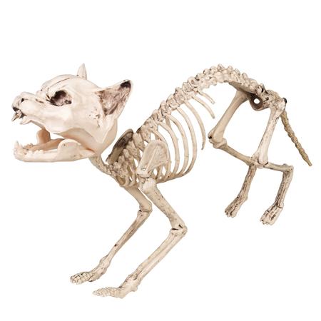 Halloween Kat skelet Decoratie