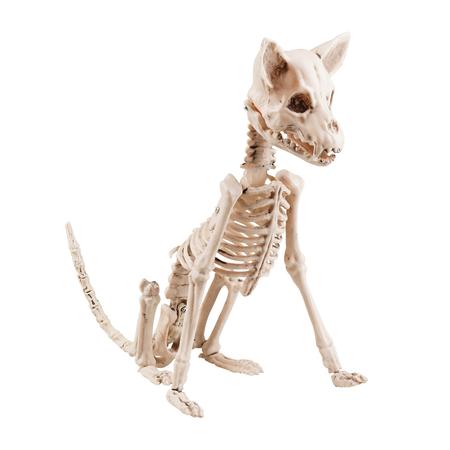 Halloween hond skelet Decoratie