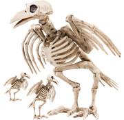 kraai skelet