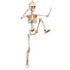 Hangend mens Skelet