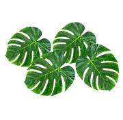 Decoratie Palmbladeren