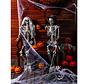 Menselijk Lichaam skelet 160 cm