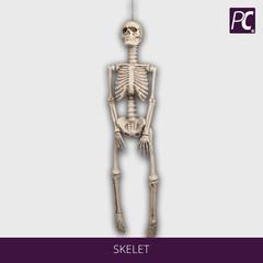 Skelet