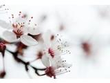 Fibatec Luxury Flower Aroma - Filling