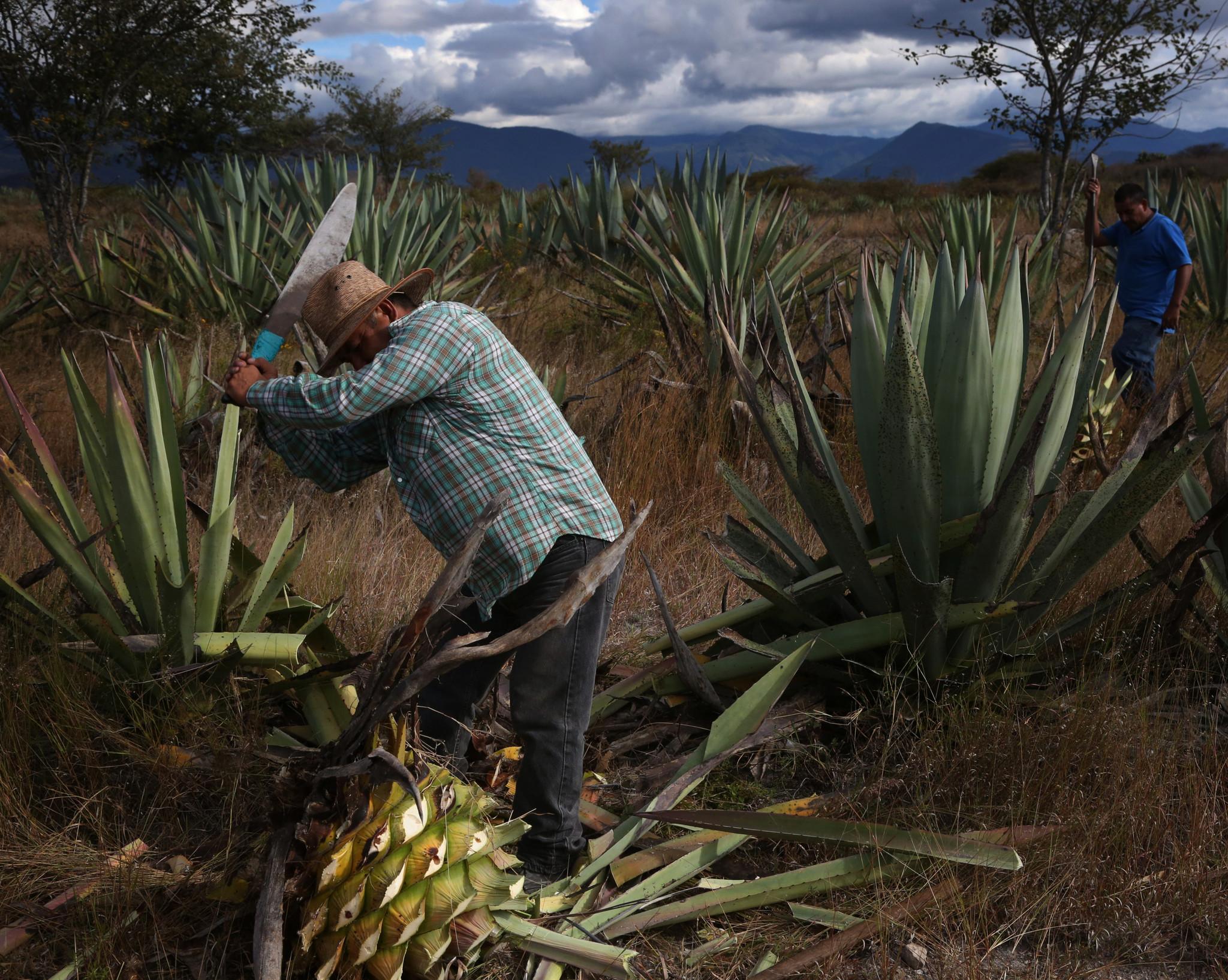 Mezcal Nucano Joven Tobala