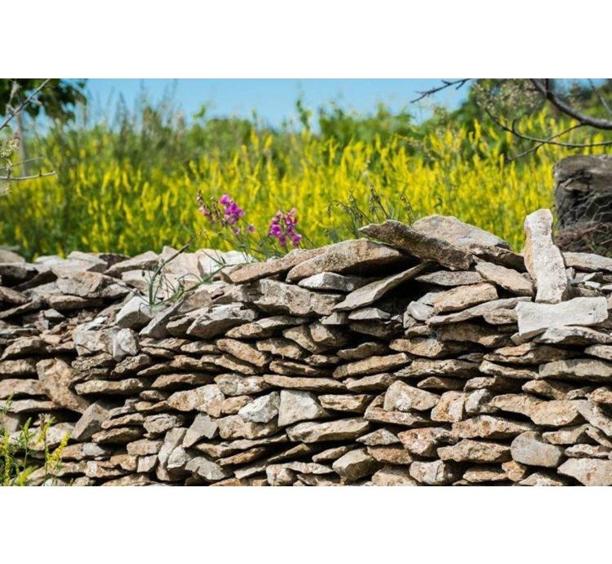 Vieux Carignan 2018  Languedoc Frankrijk