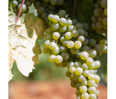 Verdejo wijn