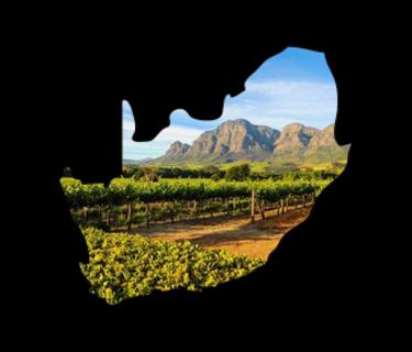 Zuid Afrikaanse wijn