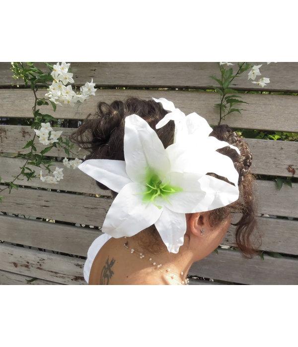 Haarblüte Aloha Lilie weiß 2 x