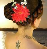 Korallfarbene Fee Haarblüte 2 x