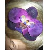 Purple Paradise Orchids 2 x