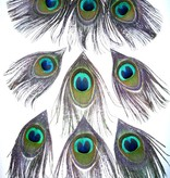 Peacock Upgrade for dread fall